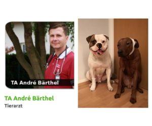 15.02.2019 – 19 Uhr – Erste Hilfe Hund Seminar mit Tierarzt André Bärthel